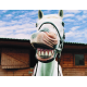 Horse Dental Care