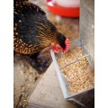 Poultry Feed and Supplements