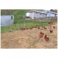 Poultry Netting and Tools