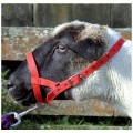 Halters and Leads for Sheep, Goats, Alpacas