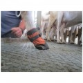 Hoof Care for Sheep Goats Alpacas