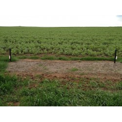 Adama Uragan Fence Weed Control 5kg