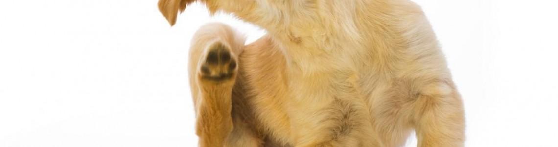 Grooming and Flea Control