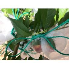 Fruit Saver Drawstring Bag Medium