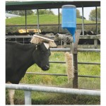 Cattle Brush and Oiler
