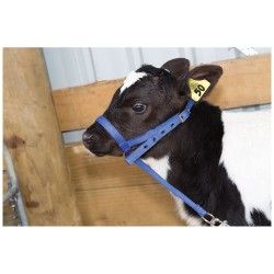 Leading Halter Nylon Calf Farming Supplies