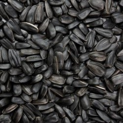 Black Sunflower Seed suitable for poultry and bird feed