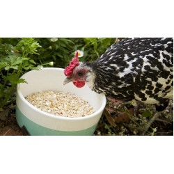 Medium Grade Shell Grit suitable for poultry and bird feed