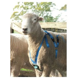 Crayons for ram / buck harness 5 pack