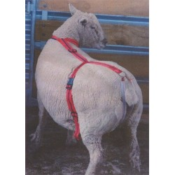 Adlam Versatile Lambing Harness for Prolapse Support, Adoption and Mothering Assistance