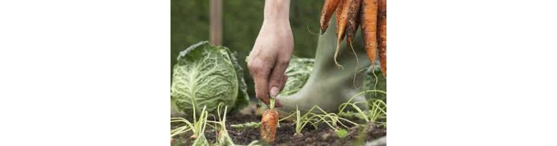 Gardening and Growing