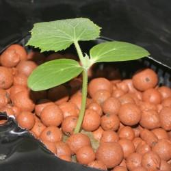 Canna Clay Pebbles 45L bag