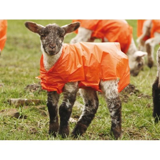 5 x Lammacs Lamb Jackets