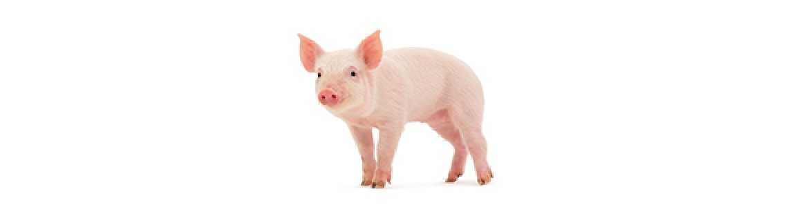 Pigs and Porkers