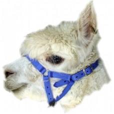 Alpaca / Goat  Webbing Halter - Budget One Size Adjustable