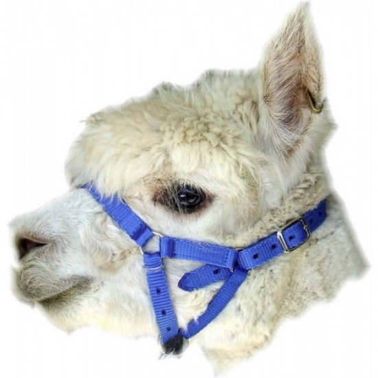 Alpaca / Goat  Webbing Halter - Budget One Size Adjustable