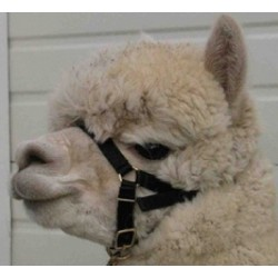 Alpaca Webbing Halter - High Quality Suit Crias