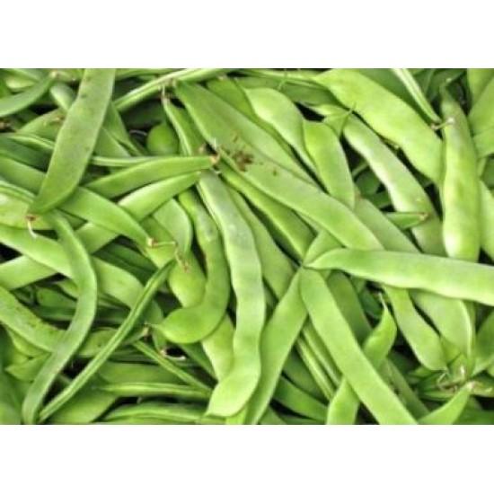 Bean Bush Hawkesbury Wonder Seed Packet Organically Certified