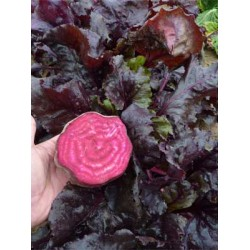Beetroot Bulls Blood Seed Packet Organically Certified