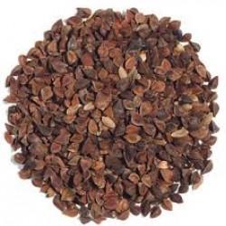 Buckwheat Seed Bulk Sprouting Organically Certified