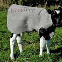 Calf Cover Woolover Coat Keep Calves Warm in Winter