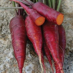 Carrot Cosmic Purple Seed Packet