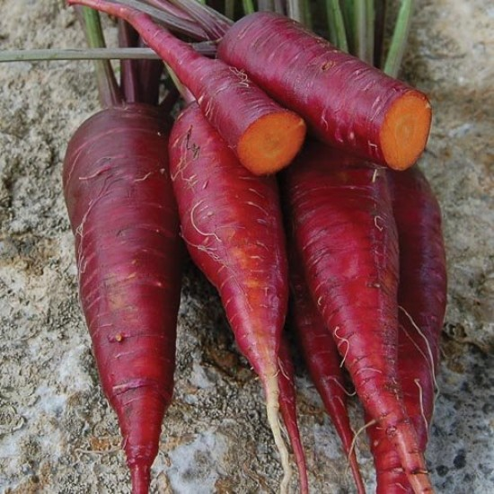 Carrot Purple Dragon Seed Packet Organically Certified
