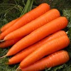 Carrot Western Red Seed Packet Organically Certified