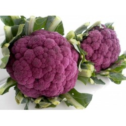 Cauliflower Purple Sicily Organically Certified