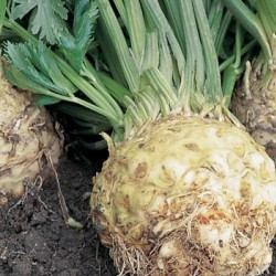 Celeriac Seed Packet