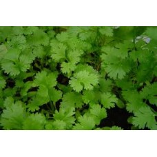 Coriander Seed Packet