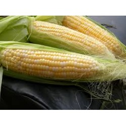 Corn Sweet Golden Bantam Seed Packet Organically Certified