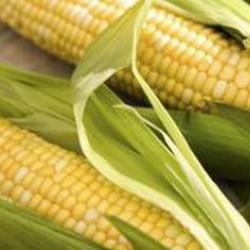 Corn Sweet Hawaiian Seed Packet Organically Certified
