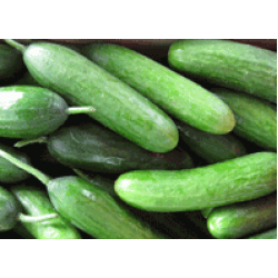 Cucumber Lebanese Seed Packet Organically Certified