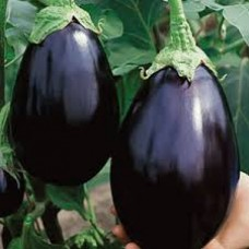 Eggplant Black Beauty Seed Packet Organically Certified