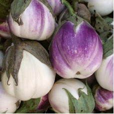 Eggplant Rosa Bianca Seed Packet Organically Certified