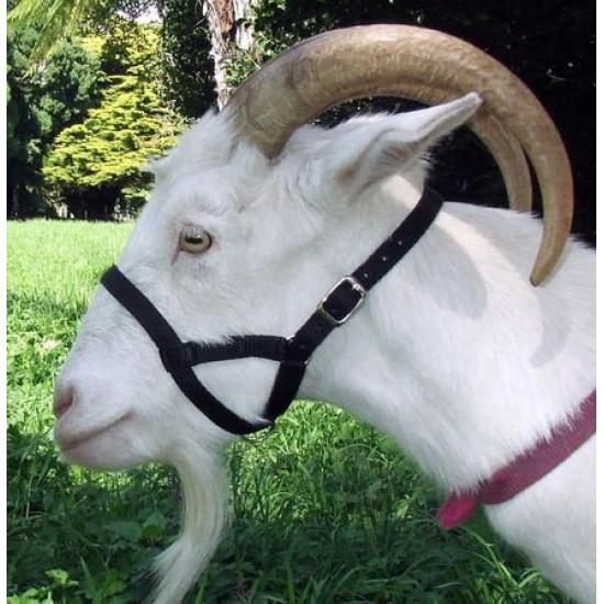 Goat Webbing Halter - Large for Large Size Goats