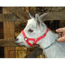 Goat Webbing Halter - Small Suit Kids or Young Goats