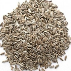 Grey Stripe Sunflower Seed suitable for poultry and bird feed