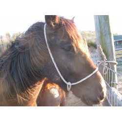 Halter Poly rope Calf / Colt