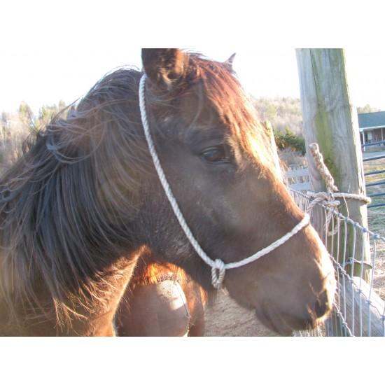 Halter Poly rope Calf / Colt