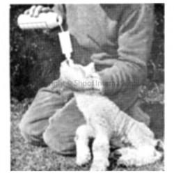 Lamb kid Reviver Stomach Feeder Roslam