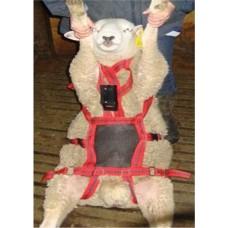 No Mate Teaser Harness: Buck Ram Chastity Belt!