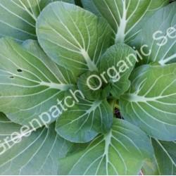 Pak Choi Organically Certified Seed