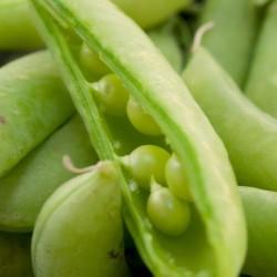 Pea Sugar Snap Organic Seed Packet