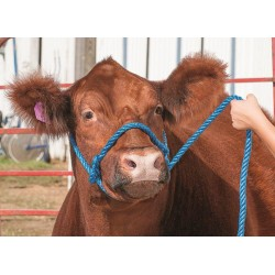 Poly rope Cow / Horse Halter