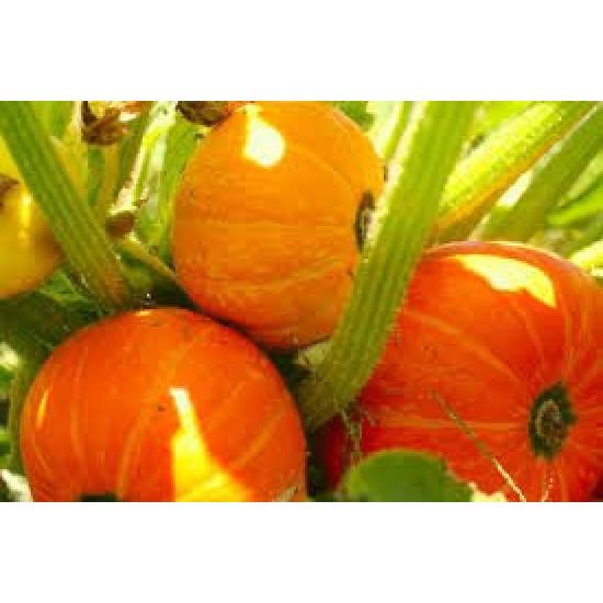 Pumpkin Golden Nugget Seed Packet Organically Certified