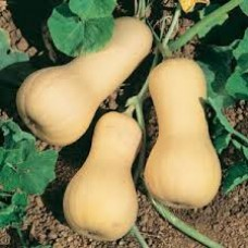 Pumpkin Waltham Butternut Seed Packet Organically Certified