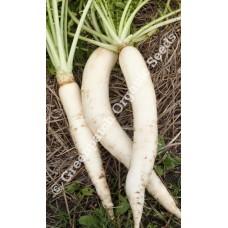 Radish Daikon Organically Certified Seed