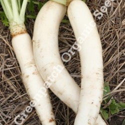 Radish Daikon Organically Certified Seed